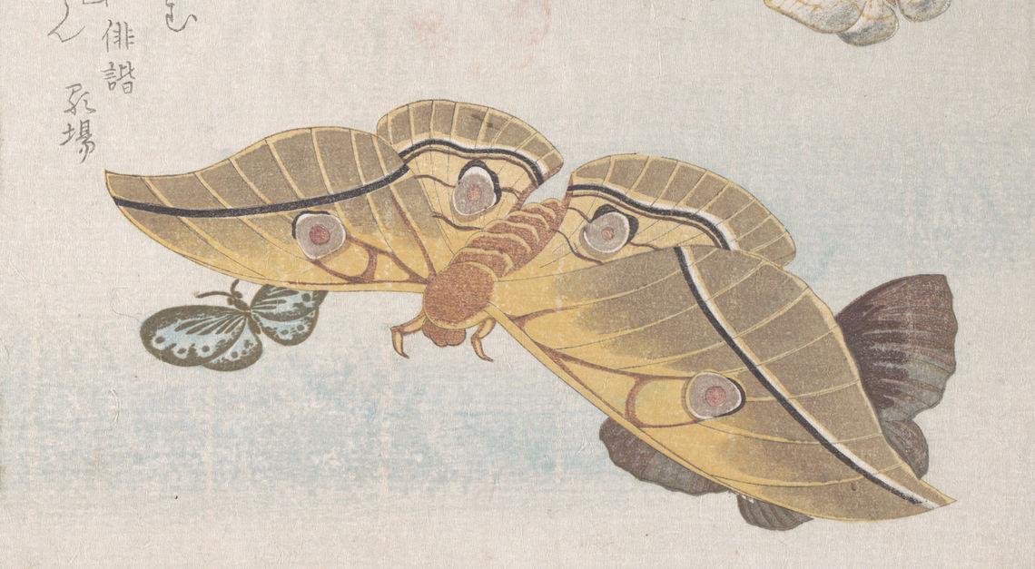 various moths and butterflies 19th cen kubo shunman